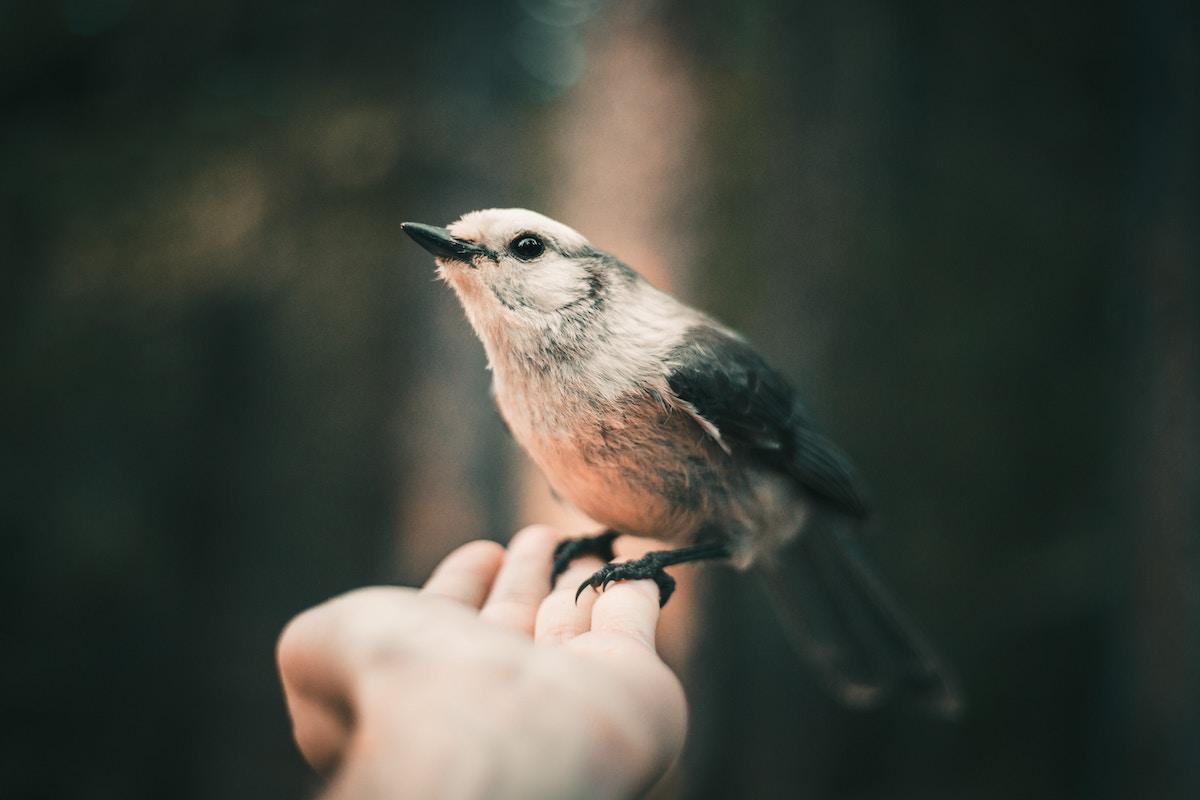 Bird On A hand